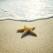 Povestea stelei de mare