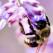 Sanatatea din stup: veninul de albina