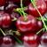 Visinele, fructele revitalizante ale verii