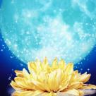 4 Noiembrie 2017 - Luna Plina in Taur. Vine o perioada magica, profitati de energia iubirii si a abundentei!