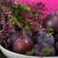 Pilaf cu prune uscate
