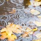 Ploi de noiembrie