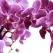 RADIANT ORCHID - culoarea anului 2014! Shopping in 15 nuante spectaculoase de Violet Orhidee