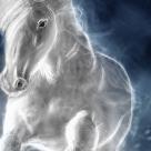Astrologie chinezeasca: Ce aduce 2014 - Anul Calului de Lemn?