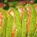 Rulada cu morcov