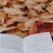 10 Poezii despre toamna pentru copii