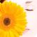 Zodiacul florilor: caracter, destin si dragoste
