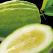 Servier lanseaza Cedraflon, prima sa crema premium pentru picioare grele, obosite