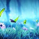 Fluturi de august și bucuria de-a iubi din nou