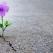 Când simți că totul se prăbușește în viața ta, citește cuvintele lui Dale Carnegie. Te vor motiva să nu renunți la visurile tale