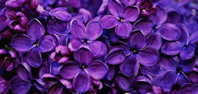 Acestea sunt flori de...