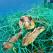 Marea Mediterană riscă să devină o mare de plastic