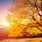 22 de citate foarte frumoase despre Toamna si dorurile ei