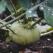 GULIA - un Super Aliment! Beneficiile extraordinare ale consumului de gulie