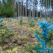 Reconstrucția ecologică - 7 motive pentru care trebuie să susținem această metodă de ocrotire a naturii
