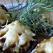 Ciupercute cu usturoi si cascaval