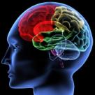 A fost descoperita 'zona raului' din creier. Ce spune despre PREDISPOZITIA GENETICA pentru VIOLENTA