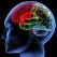 A fost descoperita \'zona raului\' din creier. Ce spune despre PREDISPOZITIA GENETICA pentru VIOLENTA