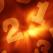 Horoscop numerologic pentru DECEMBRIE 2014: Previziunile norocului in functie de Numarul Soarelui