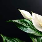 NASA spune: 5 plante miracol ce iti pot salva viata!