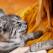MOTIVE SPIRITUALE: De ce pisica ta te-a ales pe tine?