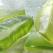 """Aloe Vera Barbadensis Miller comestibilă: supranumită """"planta minune a lumii"""""""