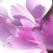 Fibromul uterin: ce solutii exista pentru a-l trata si pentru a creste sansele de obtinere a unei sarcini