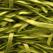 Pui cu fasole verde