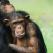 Ne-am indragostit de ele! Fotografii induiosatoare cu animalute surprinse in cele mai tandre momente!