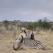 Safari, documentarul-soc despre vanatoare, a intrat in cinematografele romanesti