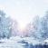 Imagini de poveste care surprind ataaat de bine atmosfera magica a iernii!