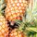 Tort de fructe PATRICIA