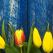 BUNAVESTIRE: 15 obiceiuri si traditii de respectat pentru a-ti merge bine tot anul!