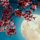 Luna plină în Fecioară de pe 9 martie - un cerc de frică, speranță și credință
