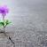 Dr. Dain Heer: Cum alegem speranta in momentele de disperare