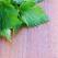 3 produse naturiste pe baza de urzica
