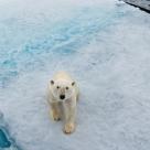 Planeta noastră suferă... WWF dezvăluie amploarea impactului omenirii asupra Pământului