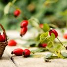 Măceșele: beneficii pentru sănătate