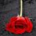Fosti iubiti, dar nu dusmani de moarte