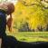 Recomandarile profesorului de yoga: 4 sfaturi prin care ne pregatim corpul pentru toamna