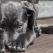 Opinia psihologului: De ce fac oamenii rau animalelor?