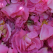 FamousRoses.eu: Din gradina in sticluta de parfum