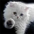 O pisica noua in casa