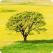 O legatura ancestrala creata printr-un juramant sacru: arborele si fiinta umana