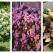 12 plante minunate care transformă o grădină într-un oază plină de culoare în sezonul de primăvară -vară