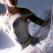 Celebrul balet pe gheata rusesc Saint Petersburg State Ballet on Ice revine la Bucuresti