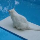 Baia pisicii: cum, cand si unde?