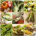 Top 5 alimente sanatoase