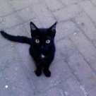 Superstitii cu si despre pisica neagra