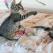 Top 4 lenjerii de pat cu imprimeuri florale romantice - acum la reducere!